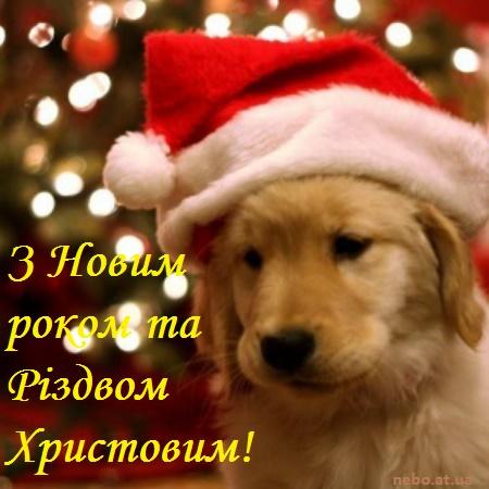 З Новим роком та Різдвом Христовим! вітальні листівки українською мовою. Песик