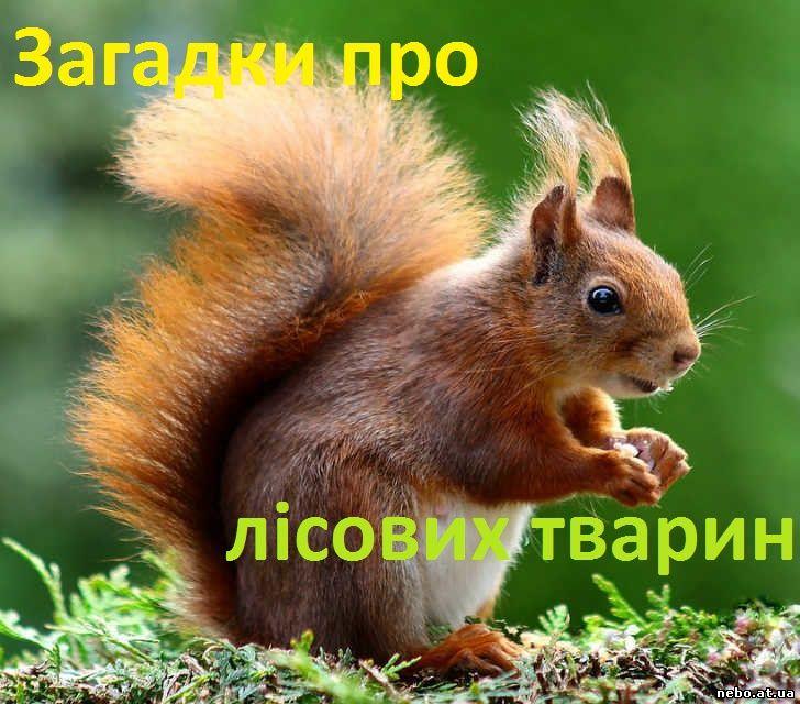 Загадки про лісових тварин