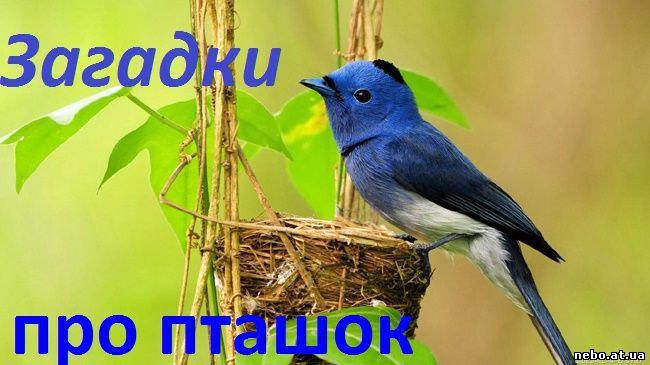 Загадки про пташок