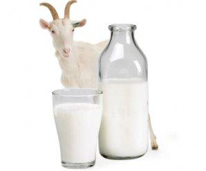 Козяче молоко - користь і шкідливість