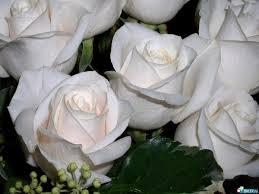 Троянди для Святителя