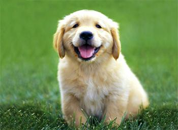 Найдобріша порода собак
