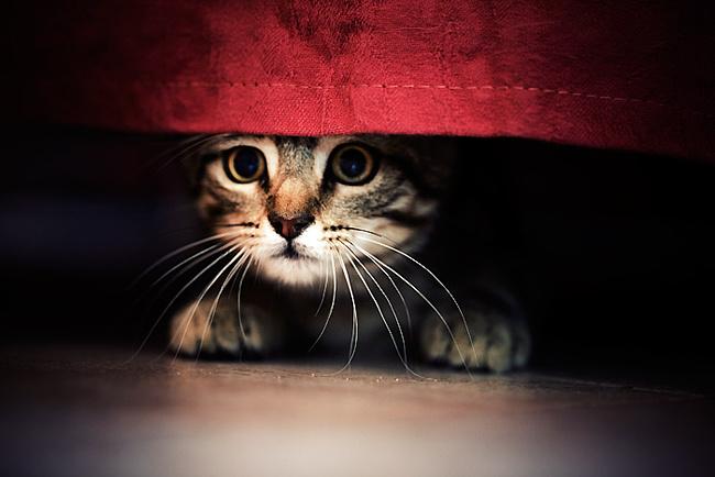 Що виводить запах котячої сечі