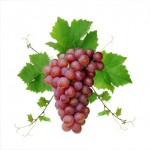 Чи можна вагітним виноград