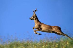 Куди біжить лісовий олень? Рисунковий тест