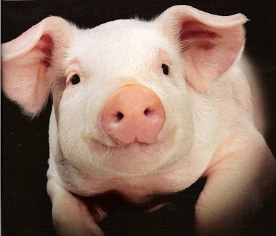 Тест - Намалюй свиню